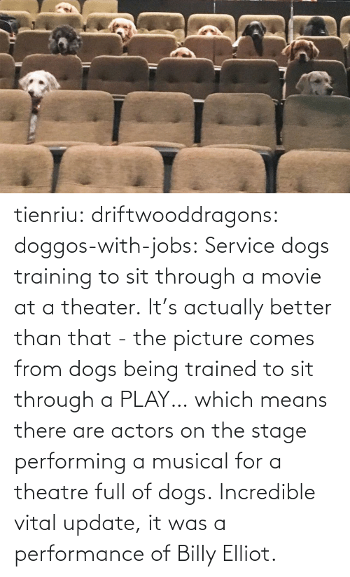 Dogs: tienriu: driftwooddragons:  doggos-with-jobs: Service dogs training to sit through a movie at a theater. It's actually better than that - the picture comes from dogs being trained to sit through a PLAY… which means there are actors on the stage performing a musical for a theatre full of dogs.   Incredible vital update,  it was a performance of Billy Elliot.