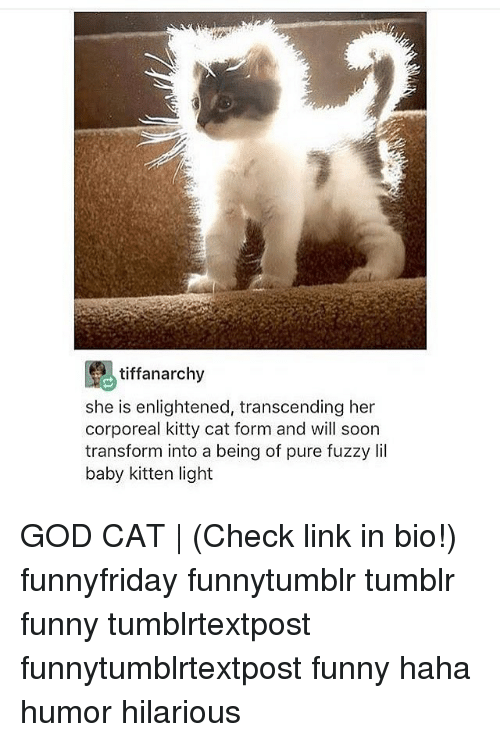 Funny, God, and Memes: tiffanarchy  she is enlightened, transcending her  corporeal kitty cat form and will soon  transform into a being of pure fuzzy Iil  baby kitten light GOD CAT | (Check link in bio!) funnyfriday funnytumblr tumblr funny tumblrtextpost funnytumblrtextpost funny haha humor hilarious