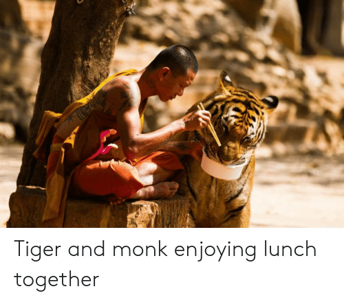 Tiger, Monk, and Together: Tiger and monk enjoying lunch together