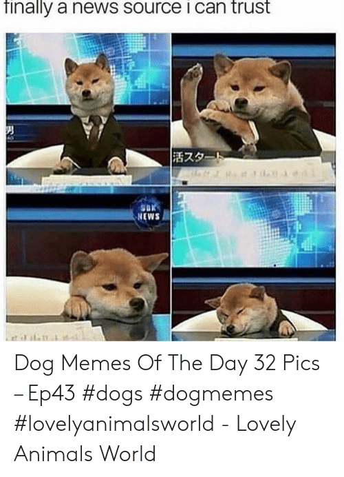 Animals, Dogs, and Memes: Tinally a news source I can trust  活スタ  NEWS Dog Memes Of The Day 32 Pics – Ep43 #dogs #dogmemes #lovelyanimalsworld - Lovely Animals World