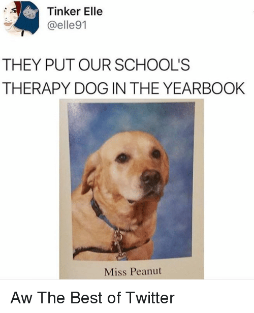 Dank, Twitter, and Best: Tinker Elle  @elle91  THEY PUT OUR SCHOOL'S  THERAPY DOG IN THE YEARBOOK  Miss Peanut Aw The Best of Twitter