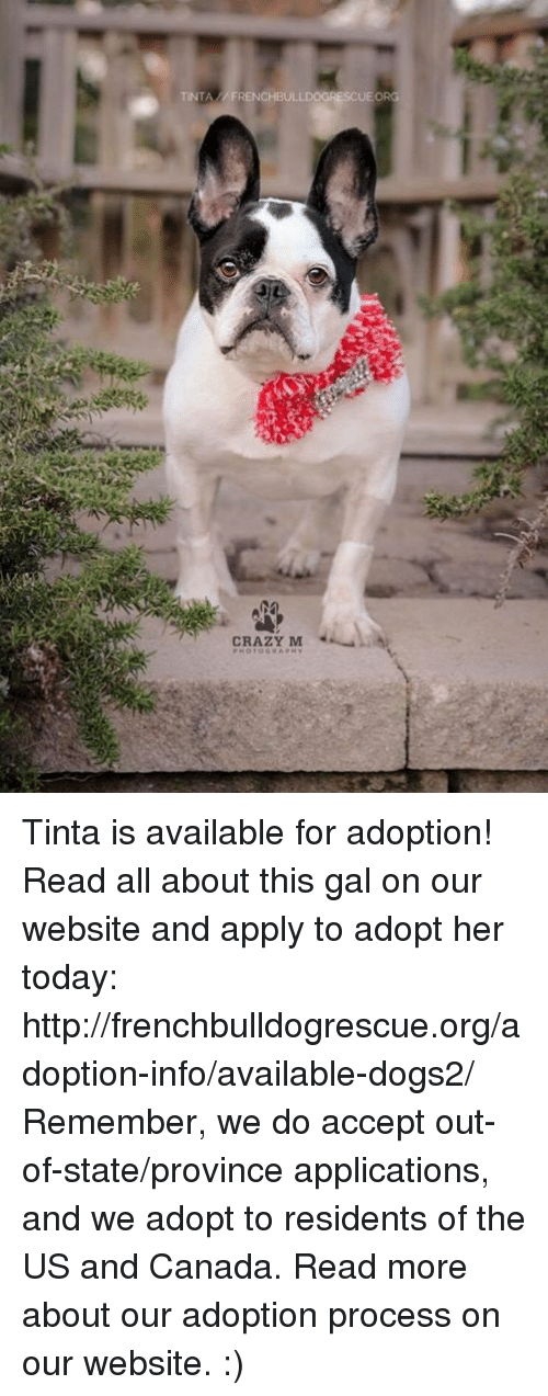 Crazy, Memes, and Canada: TINTA FRENCHBULLDOGRESCUE ORG  CRAZY M Tinta is available for adoption! Read all about this gal on our website <location, likes, dislikes> and apply to adopt her today: http://frenchbulldogrescue.org/adoption-info/available-dogs2/  Remember, we do accept out-of-state/province applications, and we adopt to residents of the US and Canada. Read more about our adoption process on our website. :)