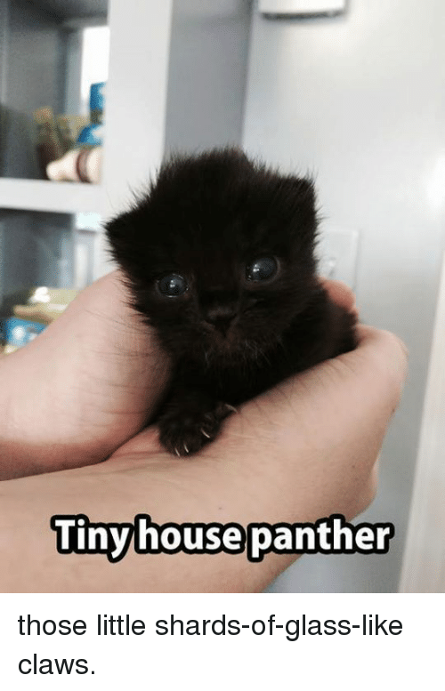 shard: Tiny house panther those little shards-of-glass-like claws.