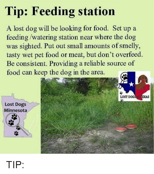 Dogs, Food, and Memes: Tip: Feeding station  A lost dog will be looking for food. Set up a  feeding/watering station near where the dog  was sighted. Put out small amounts of smelly,  tasty wet pet food or meat, but don't overfeed.  Be consistent. Providing a reliable source of  food can keep the dog in the area  LOST DOG  Lost Dogs  Minnesota TIP: