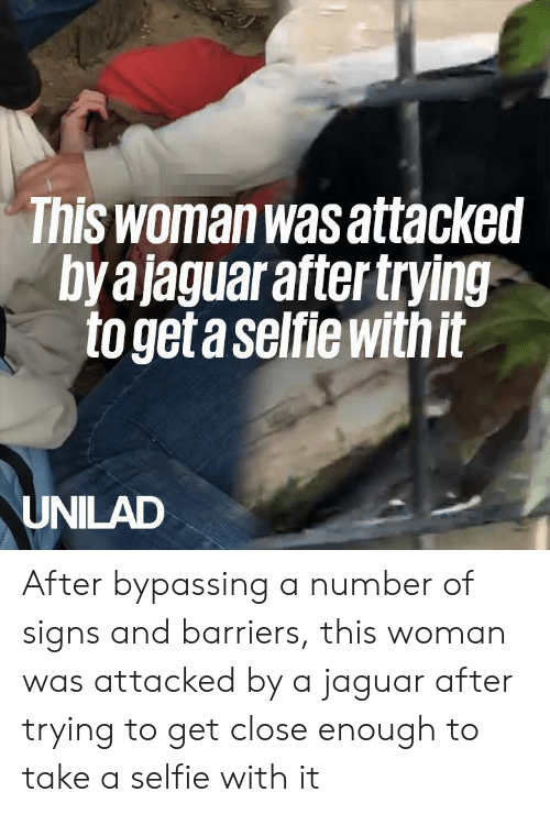 Dank, Selfie, and Jaguar: Tnis woman was attacked  by ajaguar after trying  to get a selfie withit  UNILAD After bypassing a number of signs and barriers, this woman was attacked by a jaguar after trying to get close enough to take a selfie with it