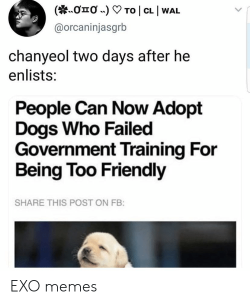 Dogs, Memes, and Government: To | CL I WAL  onO .)  @orcaninjasgrb  chanyeol two days after he  enlists:  People Can Now Adopt  Dogs Who Failed  Government Training For  Being Too Friendly  SHARE THIS POST ON FB: EXO memes