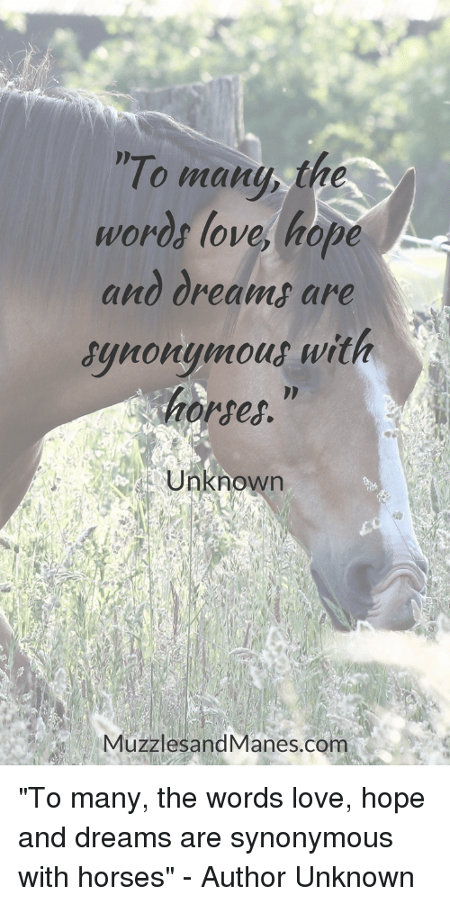 """Horses, Love, and Dreams: To many, the  Words love, hope  and dreams are  synonymout with  horses.""""  Unknown  MuzzlesandManes.com """"To many, the words love, hope and dreams are synonymous with horses"""" - Author Unknown"""