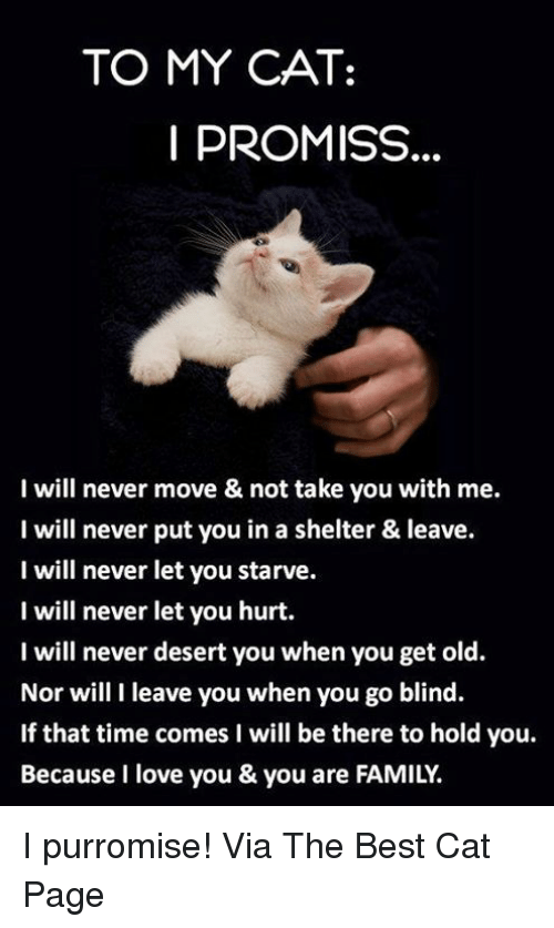 Cats, Family, and Love: TO MY CAT:  I PROMISS  I will never move & not take you with me.  I will never put you in a shelter & leave.  I will never let you starve.  I will never let you hurt.  I will never desert you when you get old.  Nor will I leave you when you go blind.  If that time comes I will be there to hold you.  Because I love you & you are FAMILY. I purromise! Via The Best Cat Page