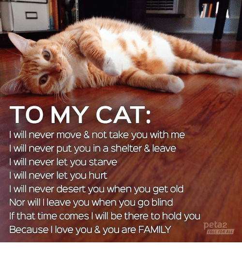 Cats, Family, and Love: TO MY CAT:  I will never move & not take you with me  I will never put you in a shelter & leave  I will never let you starve  I will never let you hurt  I will never desert you when you get old  Nor will I leave you when you go blind  If that time comes I will be there to hold you  Because I love you & you are FAMILY  peta2  FREE FOR ALL