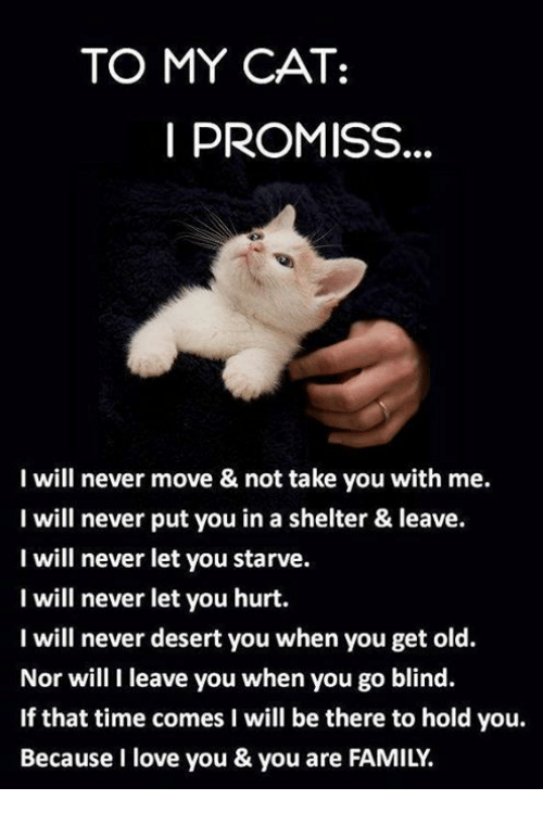 Family, Love, and Memes: TO MY CAT:  PROMISS  I will never move & not take you with me  I will never put you in a shelter & leave.  I will never let you starve.  I will never let you hurt.  I will never desert you when you get old.  Nor will I leave you when you go blind.  If that time comes I will be there to hold you.  Because I love you & you are FAMILY.