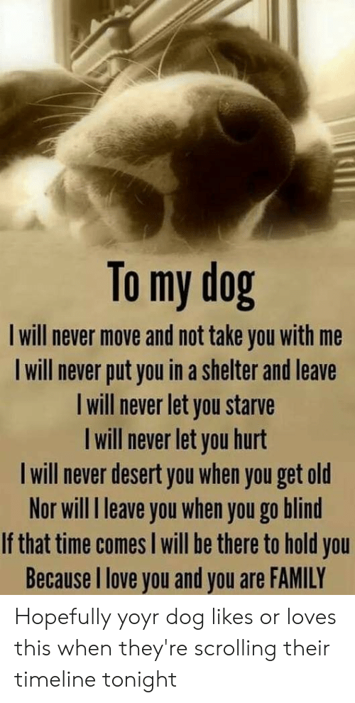 Family, Love, and I Love You: To my dog  I will never move and not take you with me  will never put you in a shelter and leave  Iwill never let you starve  I will never let you hurt  I will never desert you when you get old  Nor will I leave you when you go blind  If that time comes I will be there to hold you  Because I love you and you are FAMILY Hopefully yoyr dog likes or loves this when they're scrolling their timeline tonight