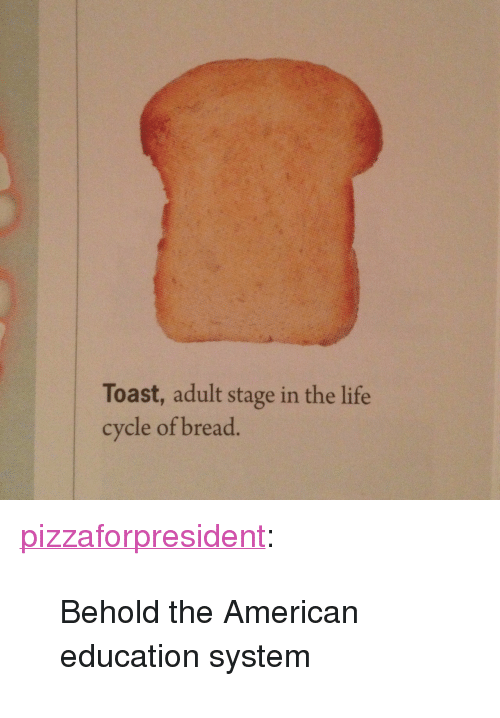 "Life, Target, and Tumblr: Toast, adult stage in the life  cycle of bread. <p><a class=""tumblr_blog"" href=""http://rhyse.ca/post/74712899822/behold-the-american-education-system"" target=""_blank"">pizzaforpresident</a>:</p>  <blockquote> <p>Behold the American education system</p> </blockquote>"