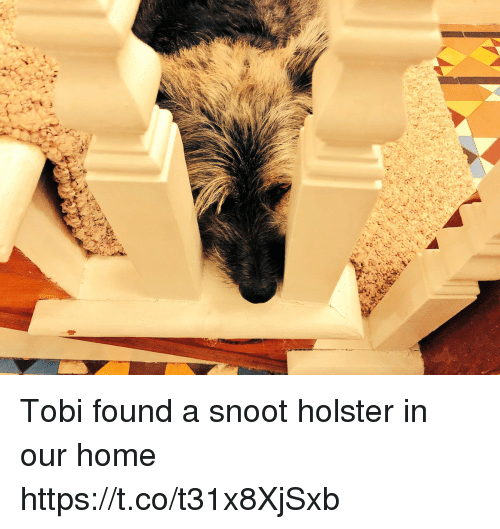 Memes, Home, and 🤖: Tobi found a snoot holster in our home https://t.co/t31x8XjSxb