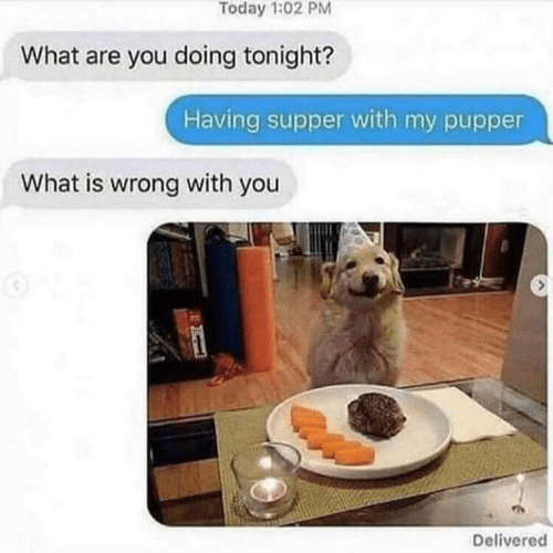 Dogs, Today, and What Is: Today 1:02 PM  What are you doing tonight?  Having supper with my pupper  What is wrong with you  Delivered