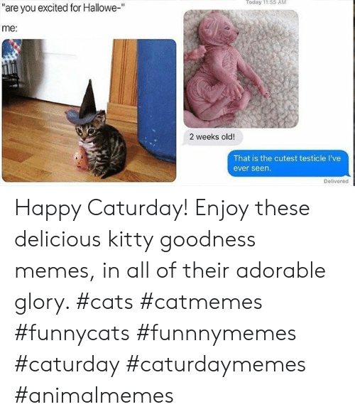 "glory: Today 11:55 AM  ""are you excited for Hallowe-""  me:  2 weeks old!  That is the cutest testicle I've  ever seen.  Delivered Happy Caturday! Enjoy these delicious kitty goodness memes, in all of their adorable glory. #cats #catmemes #funnycats #funnnymemes #caturday #caturdaymemes #animalmemes"