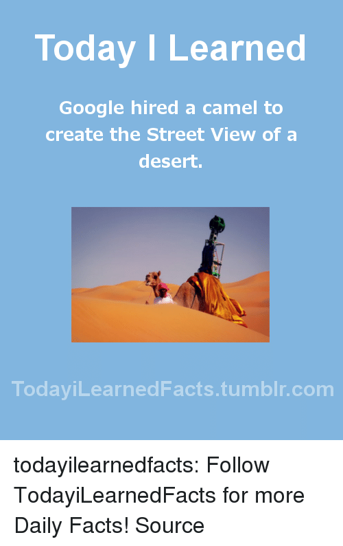 cnn.com, Facts, and Google: Today I Learned  Google hired a camel to  create the Street View of a  desert.  TodaviLearned Facts.tumblr.com todayilearnedfacts: Follow TodayiLearnedFacts for more Daily Facts! Source