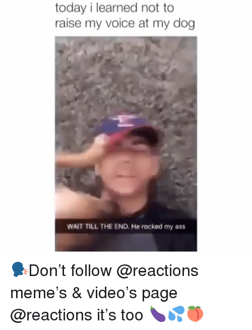Ass, Meme, and Memes: today i learned not to  raise my voice at my dog  WAIT TILL THE END. He rocked my ass 🗣Don't follow @reactions meme's & video's page @reactions it's too 🍆💦🍑