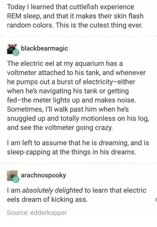 Ass, Crazy, and Aquarium: Today I learned that cuttlefish experience  REM sleep, and that it makes their skin flash  random colors. This is the cutest thing ever.  blackbearmagic  The electric eel at my aquarium has a  voltmeter attached to his tank, and whenever  he pumps out a burst of electricity-either  when he's navigating his tank or getting  fed-the meter lights up and makes noise.  Sometimes, I'll walk past him when he's  snuggled up and totally motionless on his log,  and see the voltmeter going crazy.  I am left to assume that he is dreaming, and is  sleep-zapping at the things in his dreams.  arachnospooky  I am absolutely delighted to learn that electric  eels dream of kicking ass.  Source: edderkopper