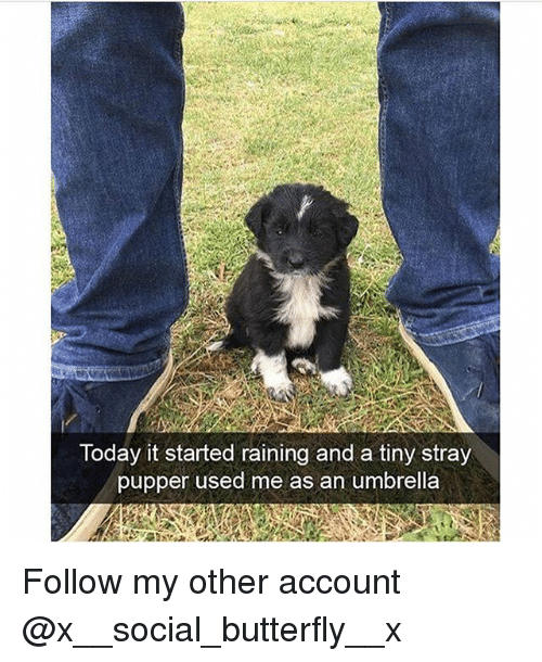 Memes, Butterfly, and Today: Today it started raining and a tiny stray  pupper used me as an umbrella Follow my other account @x__social_butterfly__x