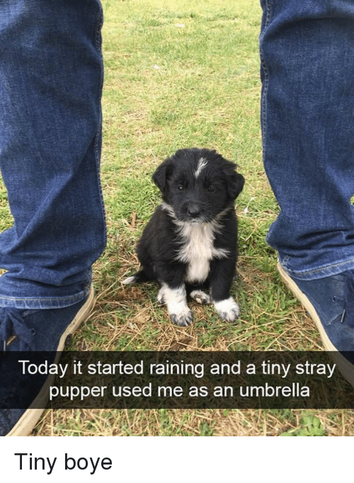 Today, Tiny, and Used: Today it started raining and a tiny stray  pupper used me as an umbrella Tiny boye