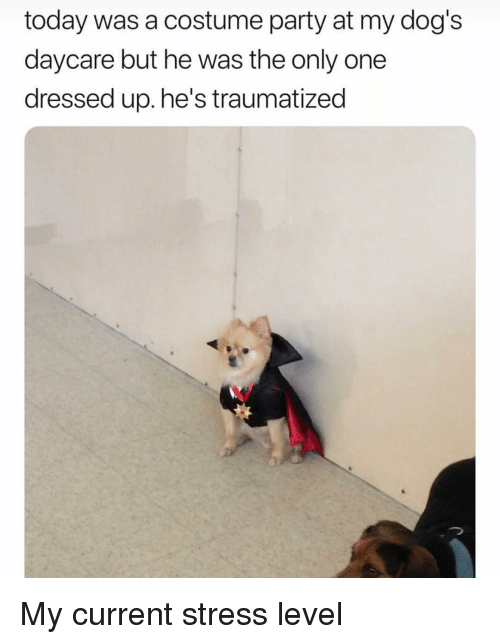 Traumatized: today was a costume party at my dog's  daycare but he was the only one  dressed up. he's traumatized My current stress level