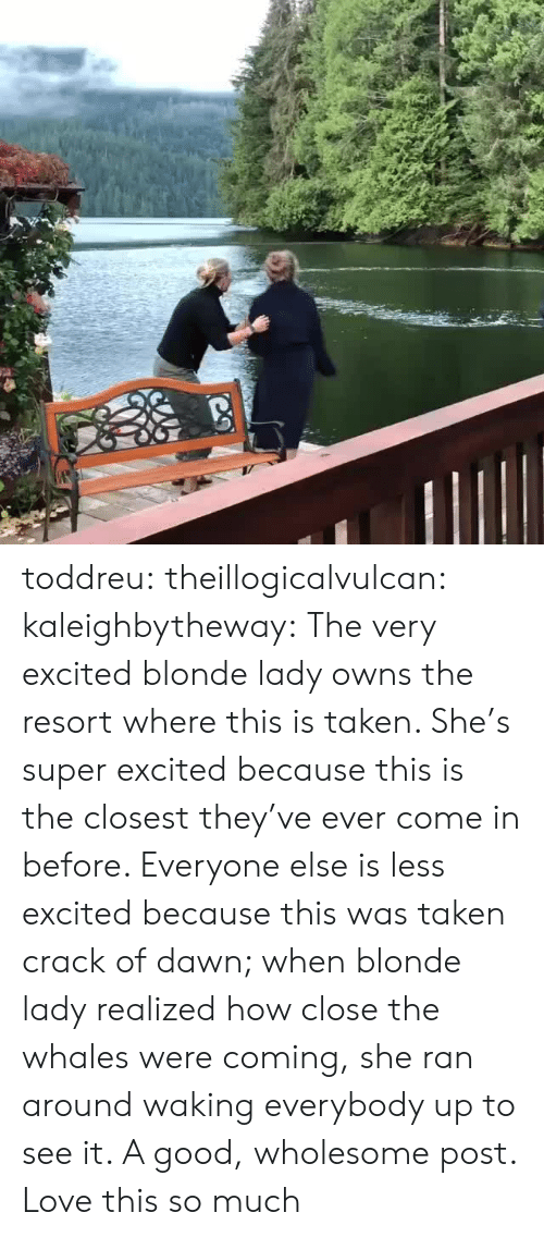 Love This So Much: toddreu: theillogicalvulcan:  kaleighbytheway: The very excited blonde lady owns the resort where this is taken. She's super excited because this is the closest they've ever come in before. Everyone else is less excited because this was taken crack of dawn; when blonde lady realized how close the whales were coming, she ran around waking everybody up to see it.   A good, wholesome post.    Love this so much