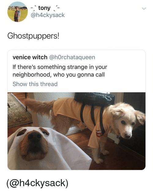 Dank Memes, Witch, and Venice: -tony-7  @h4ckysack  Ghostpuppers!  venice witch @hOrchataqueen  If there's something strange in your  neighborhood, who you gonna call  Show this thread (@h4ckysack)