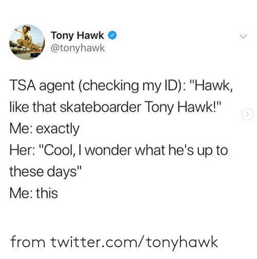 "Dank, Tony Hawk, and Twitter: Tony Hawk  @tonyhawk  TSA agent (checking my ID): ""Hawk,  like that skateboarder Tony Hawk!""  Me: exactly  Her: ""Cool, I wonder what he's up to  these days""  Me: this from twitter.com/tonyhawk"