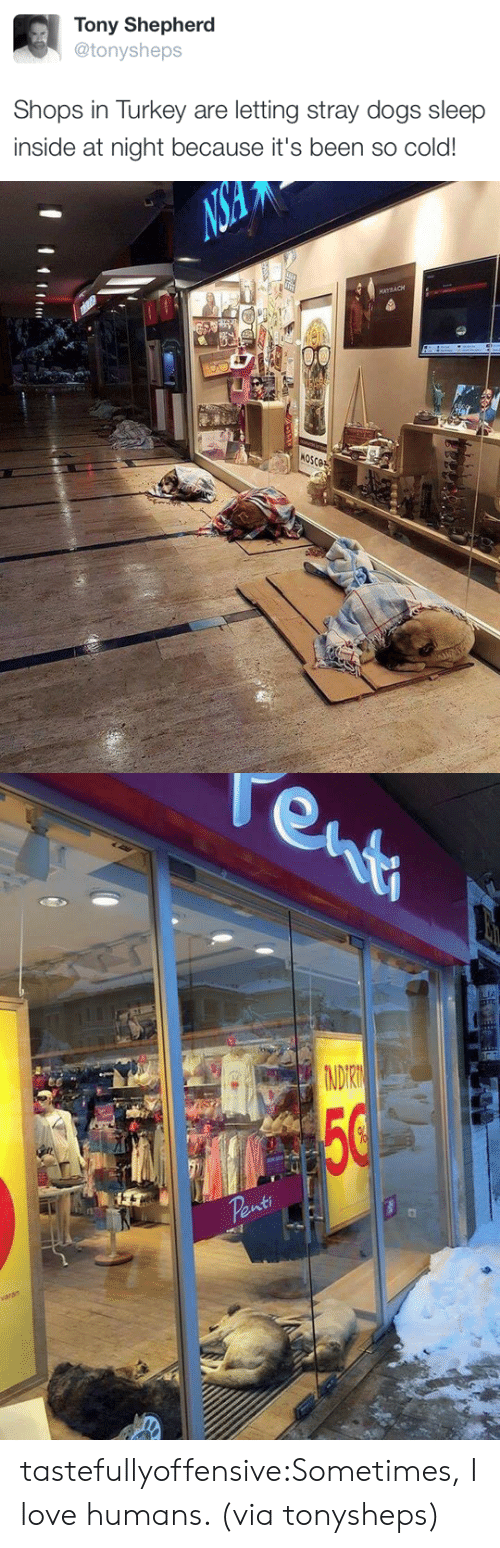 Dogs, Love, and Target: Tony Shepherd  @tonysheps  Shops in Turkey are letting stray dogs sleep  inside at night because it's been so cold!   NS  MAYBACH  4  MOSCOE   enti  TA  NDIRN  50  Penti  varan tastefullyoffensive:Sometimes, I love humans. (via tonysheps)