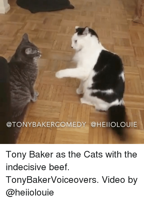 Beef, Cats, and Memes: @TONYBAKERCOMEDY@HEIIOLOUIE Tony Baker as the Cats with the indecisive beef. TonyBakerVoiceovers. Video by @heiiolouie