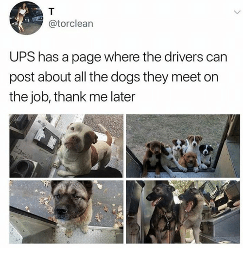 Dank, Dogs, and Ups: @torclean  UPS has a page where the drivers can  post about all the dogs they meet on  the job, thank me later