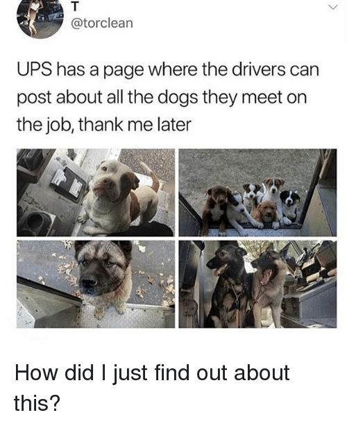 Dogs, Ups, and Girl Memes: @torclearn  UPS has a page where the drivers can  post about all the dogs they meet on  the job, thank me later How did I just find out about this?