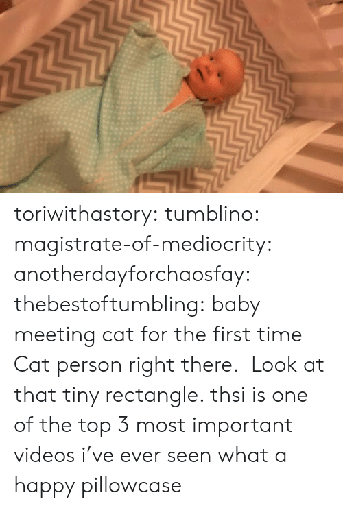 Target, Tumblr, and Videos: toriwithastory:  tumblino:  magistrate-of-mediocrity:  anotherdayforchaosfay:  thebestoftumbling:  baby meeting cat for the first time  Cat person right there.   Look at that tiny rectangle.   thsi is one of the top 3 most important videos i've ever seen   what a happy pillowcase