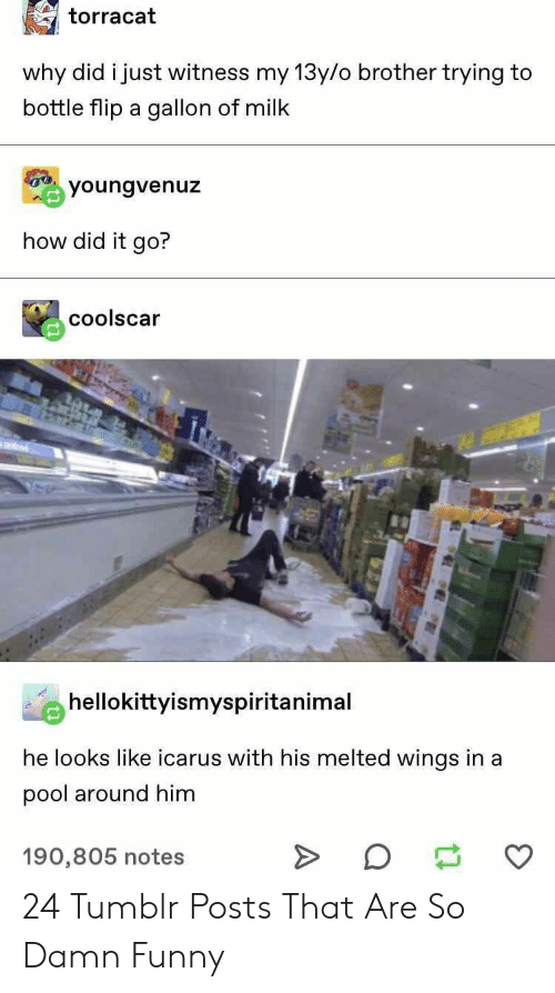 Funny, Tumblr, and Pool: torracat  why did i just witness my 13y/o brother trying to  bottle flip a gallon of milk  youngvenuz  how did it go?  coolscar  hellokittyismyspiritanimal  he looks like icarus with his melted wings in a  pool around him  190,805 notes 24 Tumblr Posts That Are So Damn Funny