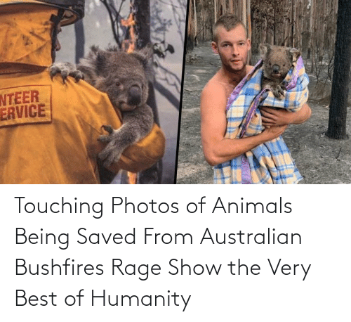 Australian: Touching Photos of Animals Being Saved From Australian Bushfires Rage Show the Very Best of Humanity