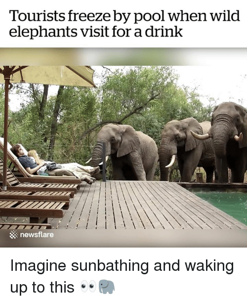 Pool, Wild, and Elephants: Tourists freeze by pool when wild  elephants visit for a drink  newsflare Imagine sunbathing and waking up to this 👀🐘