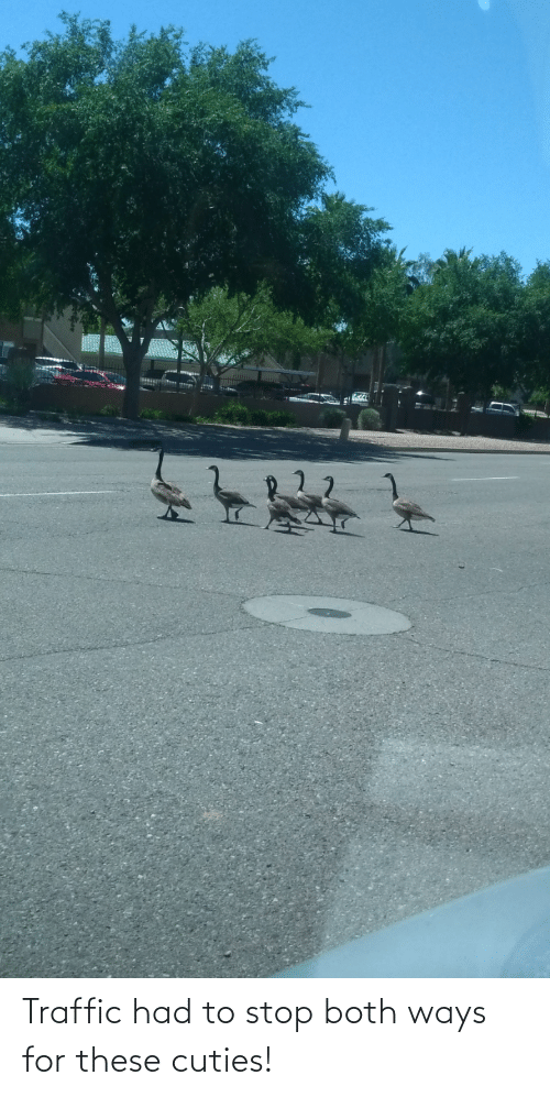 Traffic: Traffic had to stop both ways for these cuties!