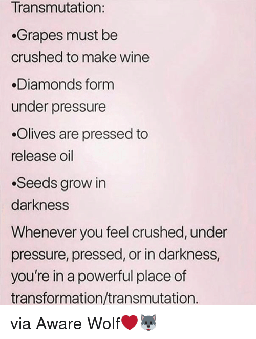 Pressure, Under Pressure, and Wine: Transmutation:  Grapes must be  crushed to make wine  Diamonds form  under pressure  .Olives are pressed to  release oil  .Seeds grow in  darkness  Whenever you feel crushed, under  pressure, pressed, or in darkness,  you're in a powerful place of  transformation/transmutation. via Aware Wolf❤️🐺