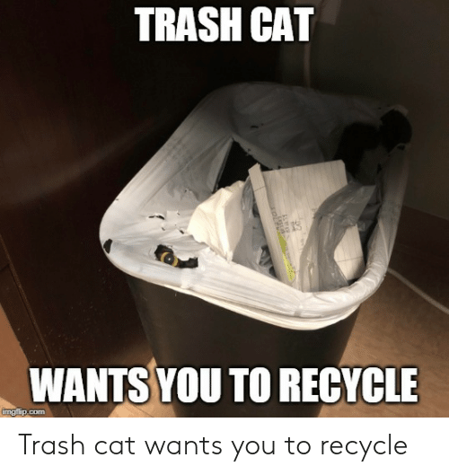 Trash, Cat, and Com: TRASH CAT  WANTS YOU TO RECYCLE  imgfip.com Trash cat wants you to recycle