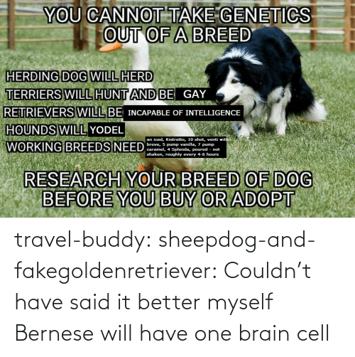 Brain: travel-buddy:  sheepdog-and-fakegoldenretriever:  Couldn't have said it better myself   Bernese will have one brain cell