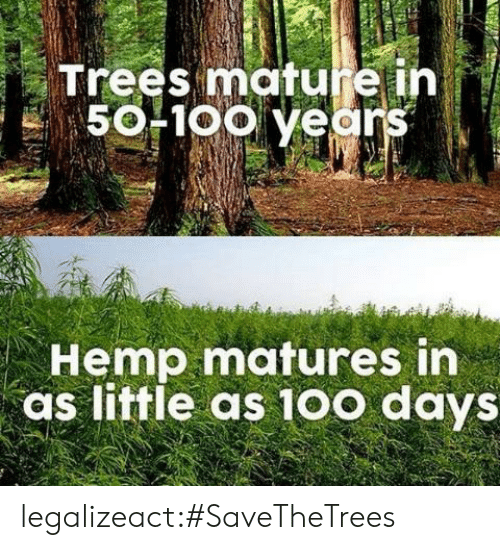 Tumblr, Blog, and Trees: Trees mature ih  50F1oo years  Hemp matures in  as little as 10o days legalizeact:#SaveTheTrees