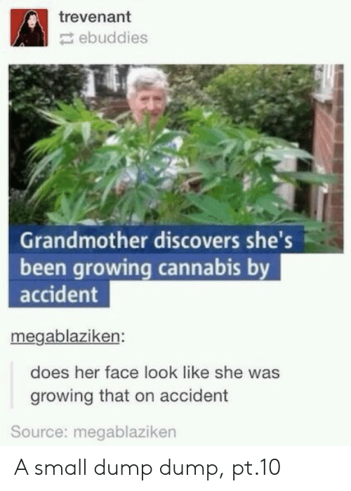 Cannabis, Been, and Her: trevenant  ebuddies  Grandmother discovers she's  been growing cannabis by  accident  megablaziken:  does her face look like she was  growing that on accident  Source: megablaziken A small dump dump, pt.10