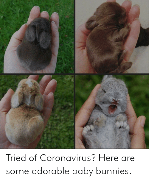 Adorable: Tried of Coronavirus? Here are some adorable baby bunnies.
