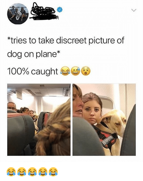 Anaconda, Girl Memes, and Dog: tries to take discreet picture of  dog on plane*  100% caught ese 😂😂😂😂😂
