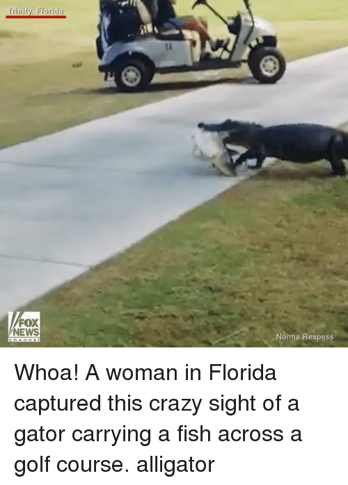 Memes, Fox News, and 🤖: Trinity, Florida  FOX  NEWS  -Norma Respess Whoa! A woman in Florida captured this crazy sight of a gator carrying a fish across a golf course. alligator