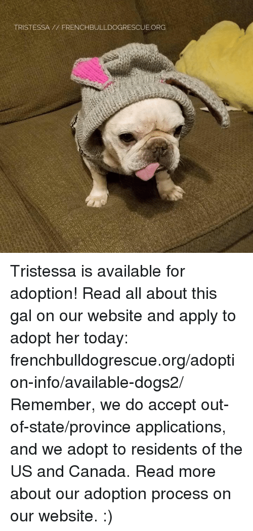 Memes, Canada, and 🤖: TRISTESSA FRENCHBULLDOGRESCUE.ORG Tristessa is available for adoption! Read all about this gal on our website <location, likes, dislikes> and apply to adopt her today: frenchbulldogrescue.org/adoption-info/available-dogs2/  Remember, we do accept out-of-state/province applications, and we adopt to residents of the US and Canada. Read more about our adoption process on our website. :)