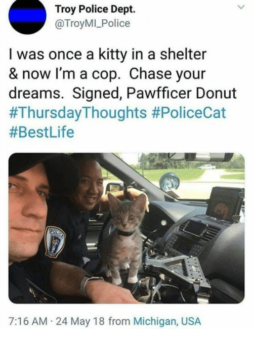 Police, Chase, and Michigan: Troy Police Dept.  @TroyMI_Police  I was once a kitty in a shelter  & now I'm a cop. Chase your  dreams. Signed, Pawfficer Donut  #ThursdayThoughts #PoliceCat  #BestLife  7:16 AM 24 May 18 from Michigan, USA