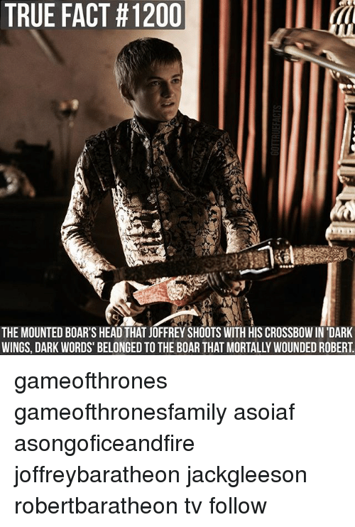 Head, Memes, and True: TRUE FACT #1200  THE MOUNTED BOAR'S HEAD THAT JOFFREY SHOOTS WITH HIS CROSSBOWIN'DARK  WINGS, DARK WORDS BELONGED TO THE BOAR THAT MORTALLY WOUNDEDROBERT gameofthrones gameofthronesfamily asoiaf asongoficeandfire joffreybaratheon jackgleeson robertbaratheon tv follow