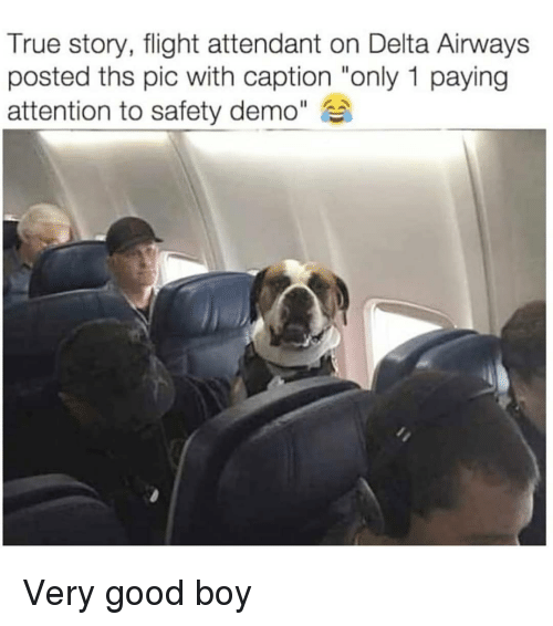 "Delta: True story, flight attendant on Delta Airways  posted ths pic with caption ""only 1 paying  attention to safety demo"" Very good boy"