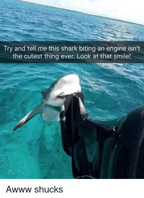 shucks: Try and tell me this shark biting an engine isn't  the cutest thing ever. Look at that smile! Awww shucks